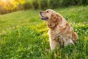 Les précautions à prendre pour un chien qui vit dehors