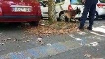 """Noxx, le nouveau chien """"stup"""" du commissariat de Besançon"""