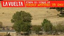 Les chevaux regardent la course / Horses watching the race - Étape 18 / Stage 18   La Vuelta 19
