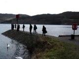 Loch Ness Złota rybka