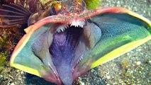 Animales del fondo marino que parecen de fantasía