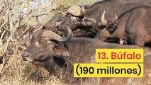 Las especies animales más pobladas en el mundo
