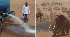 Un nouveau super-héros au Kenya livre de l'eau aux animaux pour contrer la sécheresse qui sévit