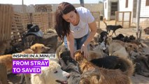 Inspire in a Minute: Saving stray dogs from the streets of Cairo