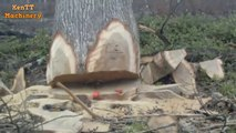 Amazing Fastest Skill Cutting Big Tree ChainSaw Machines, Heavy Biggest Felling Tree Machine working