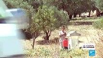 Présidentielle Tunisienne : les habitants des zones rurales désabusés
