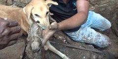 Estremecedoras imágenes de una maternal perra escarbando entre unos escombros para rescatar a sus cachorros