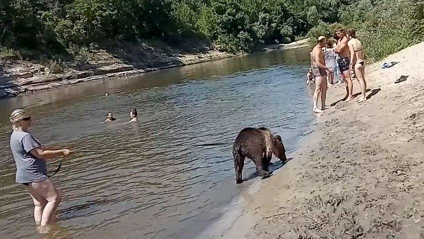 Une Russe ramène son ours au milieu de baigneurs