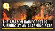 The Amazon Rainforest is Burning at an Alarming Rate & You Should Be Worried