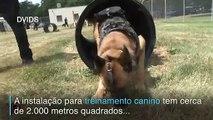 Cães em treinamento