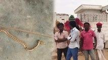 पीवणा सांप जो इंसान की छाती पर बैठकर मुंह में छोड़ता है जहर, एक परिवार को 19 बार  बना शिकार