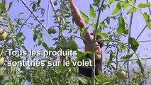 """En Dordogne, le collège le """"plus bio"""" de France"""