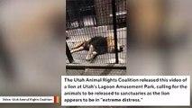 Utah Park Responds After Video Of Lion Sparks Outrage On Social Media