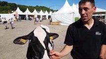 Verdun Expo - Concours agricole : Odalavie remporte la section génisse 2B