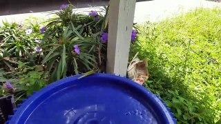 Une guêpe ambitieuse tente d'emporter une sauterelle qui fait 3 fois sa taille...