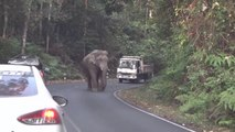 Un éléphant bloque la route en Inde... Impressionnant