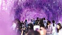 Schöne Bilder vom Mondfest in China