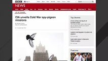 CIA Reveals Details About Using Pigeons For Spying Missions