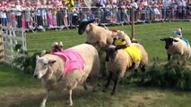 Bizarre sheep-racing contest takes place in UK