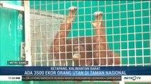 Karhutla Ancam Habitat Oran Utan di Ketapang