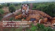 Dutzende aus Tempel gerettete Tiger sind tot