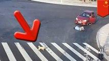 Puppy takes crosswalk after seeing jaywalker hit by car