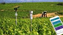 Des capteurs au champ pour lutter contre les aléas climatiques
