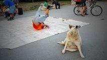 Ce chien imite des danseurs de breakdance