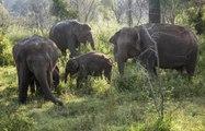 Tierarten, die vom Aussterben bedroht sind
