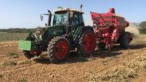 La récolte tardive de la mogette de Vendée