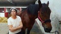 Rencontre avec Fanny Chattel, partie sur les routes de France en attelage avec Texas son bel ardennais