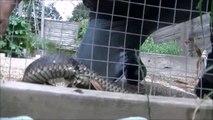 Il découvre un serpent coincé dans un grillage et le sauve