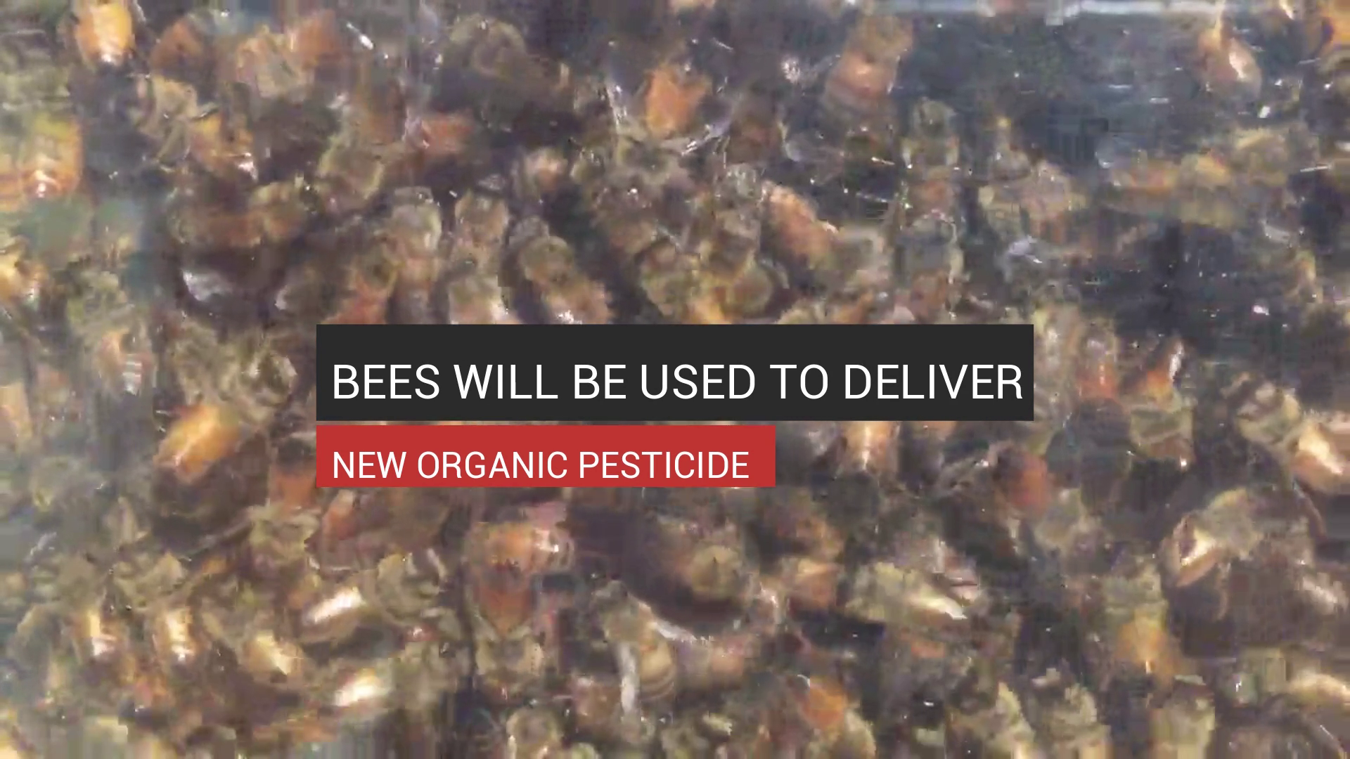 Bees Will Be Used To Deliver New Organic Pesticide