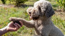 What To Do When Your Dog Cuts His Paw