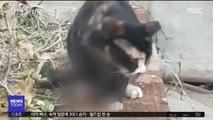 고양이 덫·강아지 사체…'연쇄 학대범' 정체는?