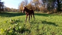 Rescued Foal Finally Stands on all Fours