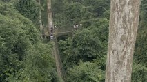 Sights with Heights: Canopy Walk in Ghana