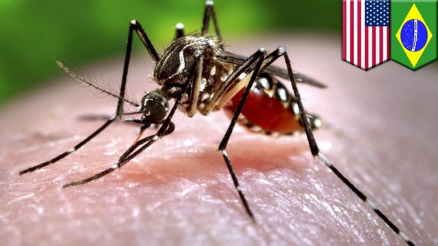 Experiment to reduce mosquitoes instead makes them stronger