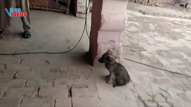 Baby Happy Cute puppy running in the home | Little Funny Dog Videos | Viral Videos