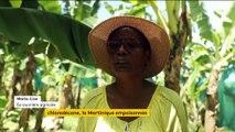 Pesticide : la Martinique empoisonnée par le chlordécone