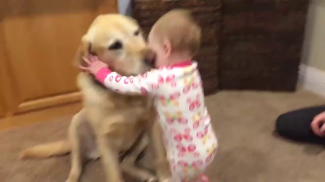 Cute Dogs And Adorable Babies Compilation