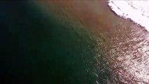 Un drone alerte un surfeur de la présence d'un requin