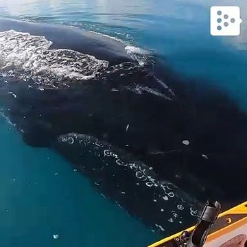 These friendly whales approached a jetski in Australia