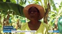 Chlordécone : une commission d'enquête créée en Martinique