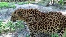"Sundari, age 22, gives us the leopard version of ""stinky face!"""
