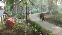 Un éléphant terrorise un village en inde