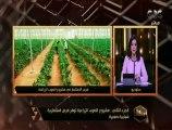 هنا العاصمة | مشروع الصوب الزراعية توفر فرص استثمارية شبابية صغيرة