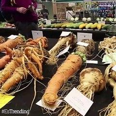Los vegetales son protagonistas en el Campeonato Nacional de Verduras Gigantes