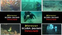 Koh Tao red rock diving site,coral reef,  triggerfish, clown fisch and thailand diving Pattaya club