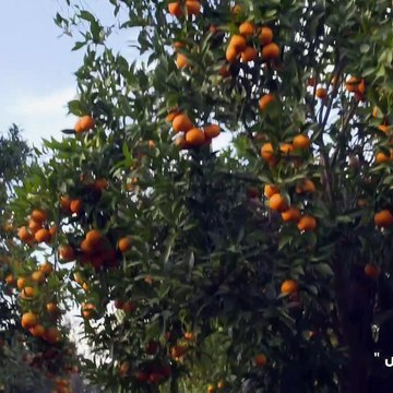 Setayesh S03E03 - سریال ستایش